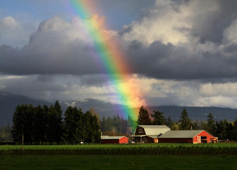 rainbow photography dairy form