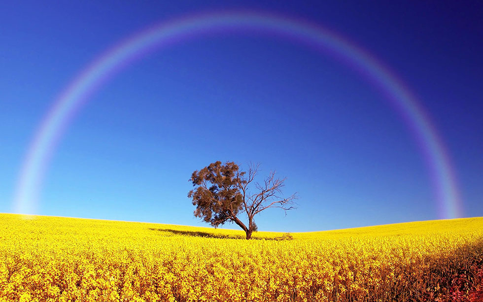 rainbow photography field