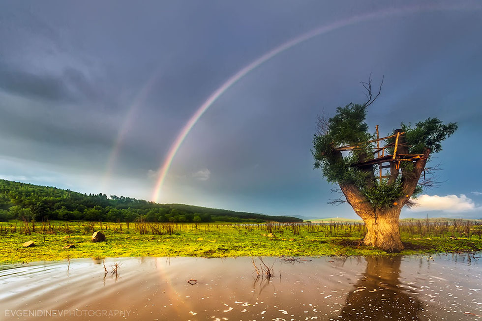 rainbow photography tree