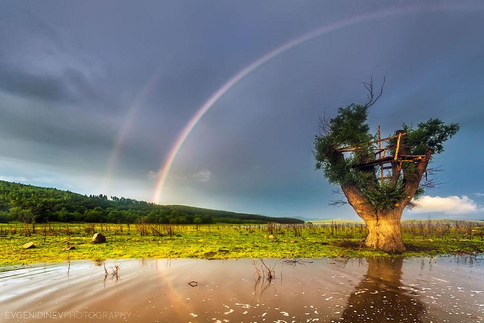 rainbow photography tree