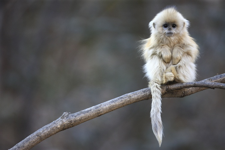wildlife photography monkey