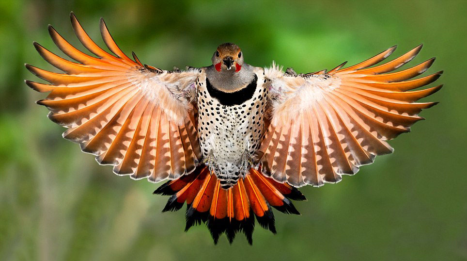 wildlife photography roy hancliff