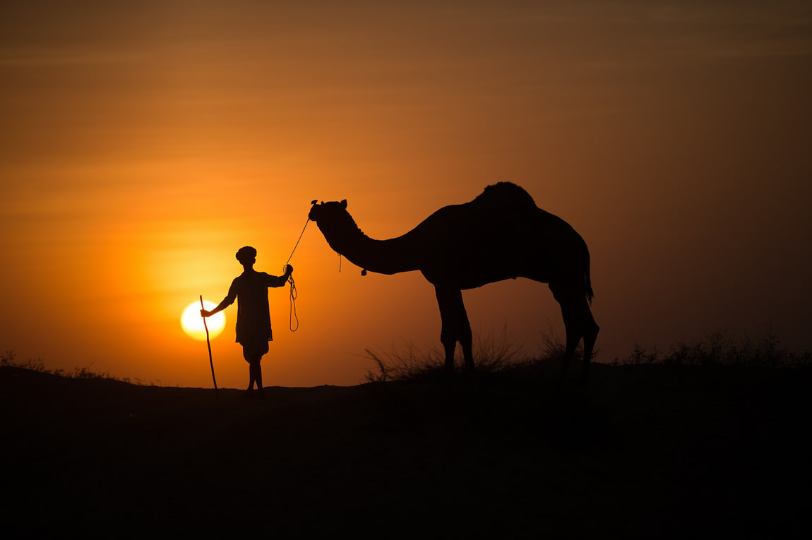 camel silhouette photography by subodh shetty
