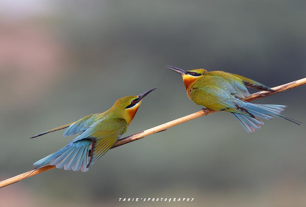 birds photography by tahir abbas