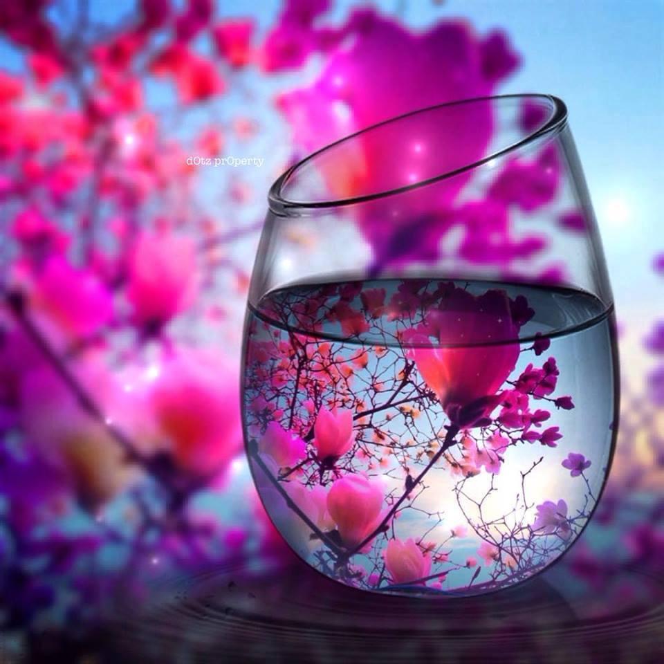 reflection photography idea garden