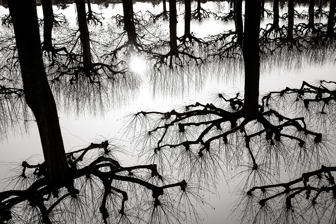 tree black and white photography by pierth