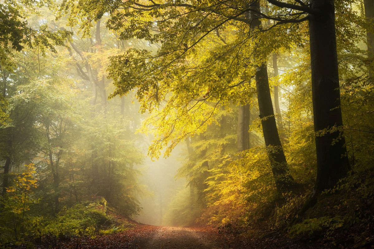 nature photography forest by heiko gerlicher