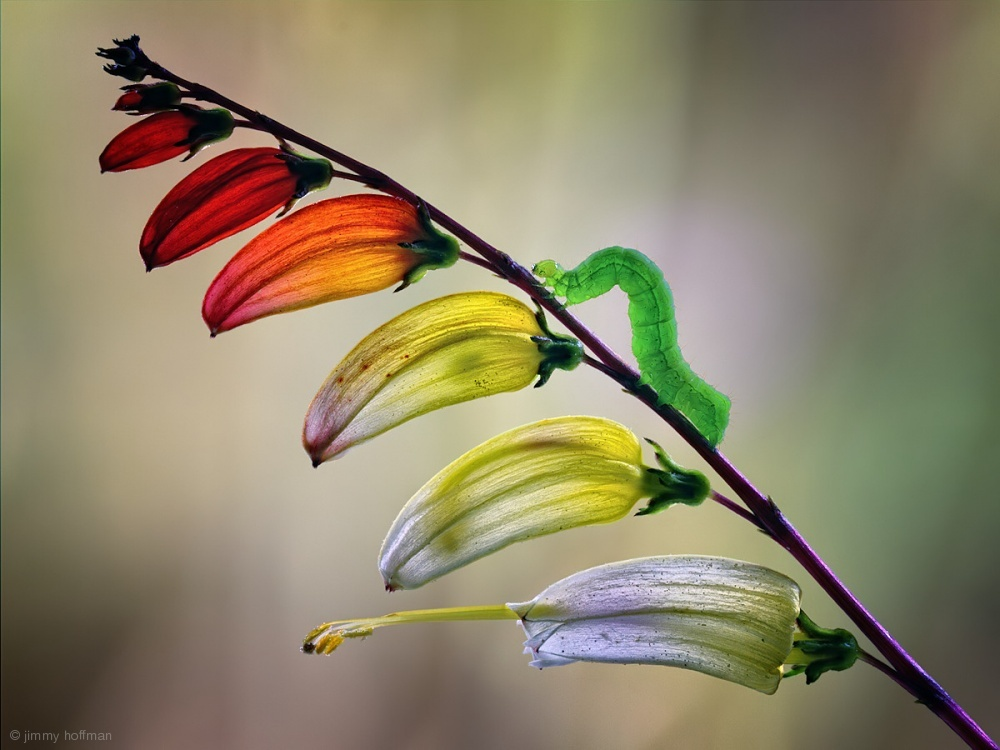 macro photography colorful worm by jimmy hoffman