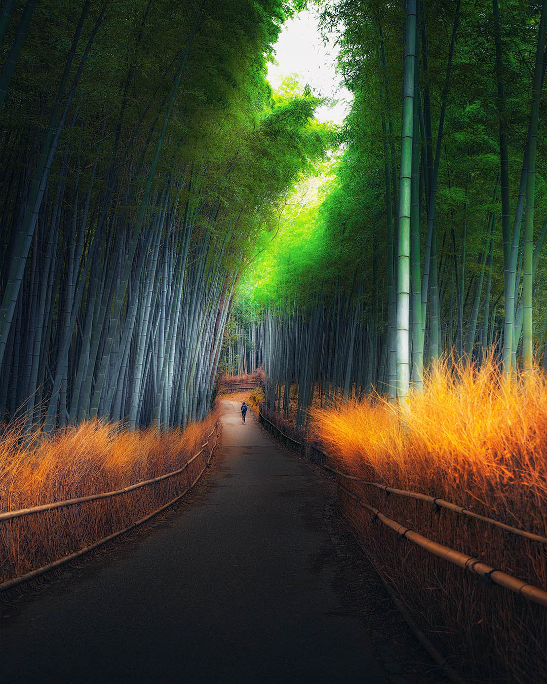 nature photography japan by kai yan