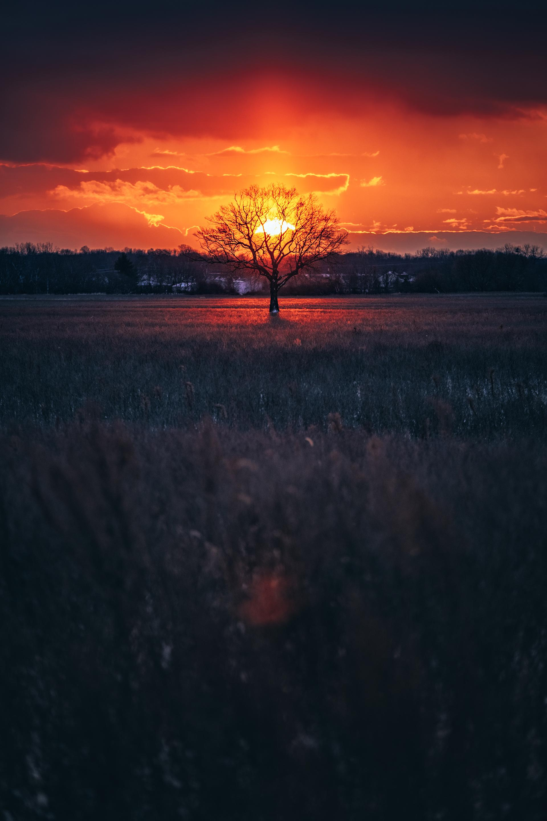 nature photography sunrise lone tree by brymnr
