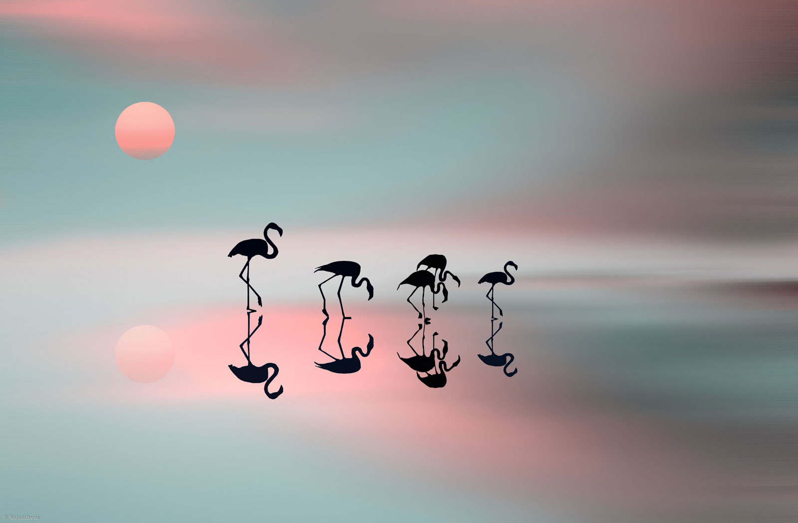 reflection photography flamingos silouette by natalia baras