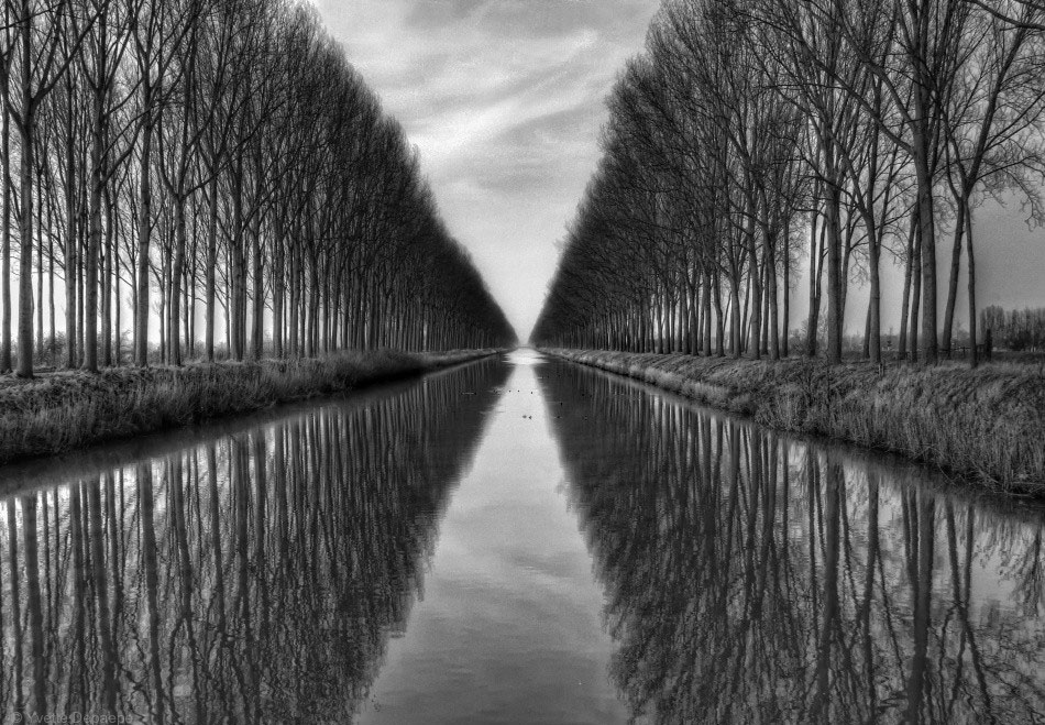 reflection photography trees by yvette depaepe
