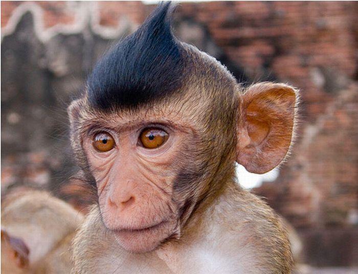 1 monkey funny photos