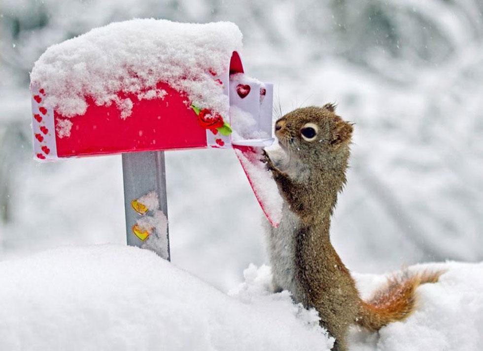 4 squirrel funny photos