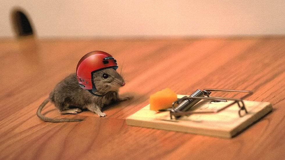 5 mouse funny photos