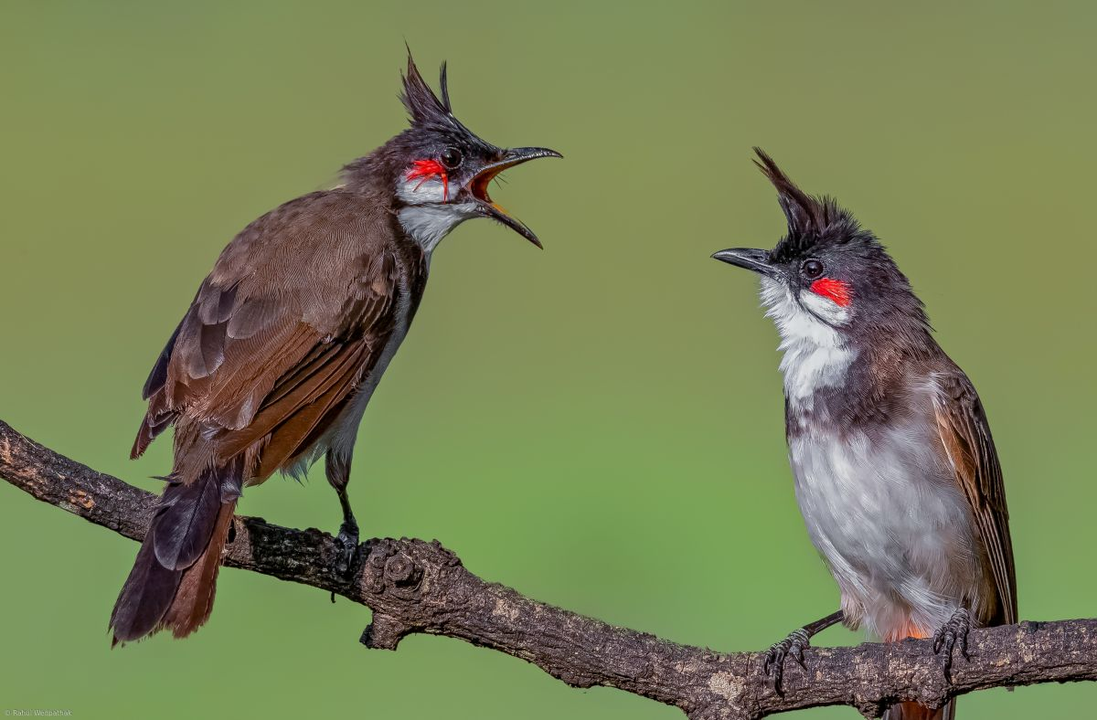 bird photography chatter
