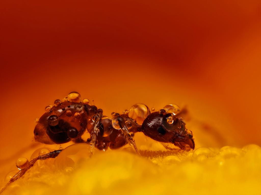 macro photography ant by john cogan