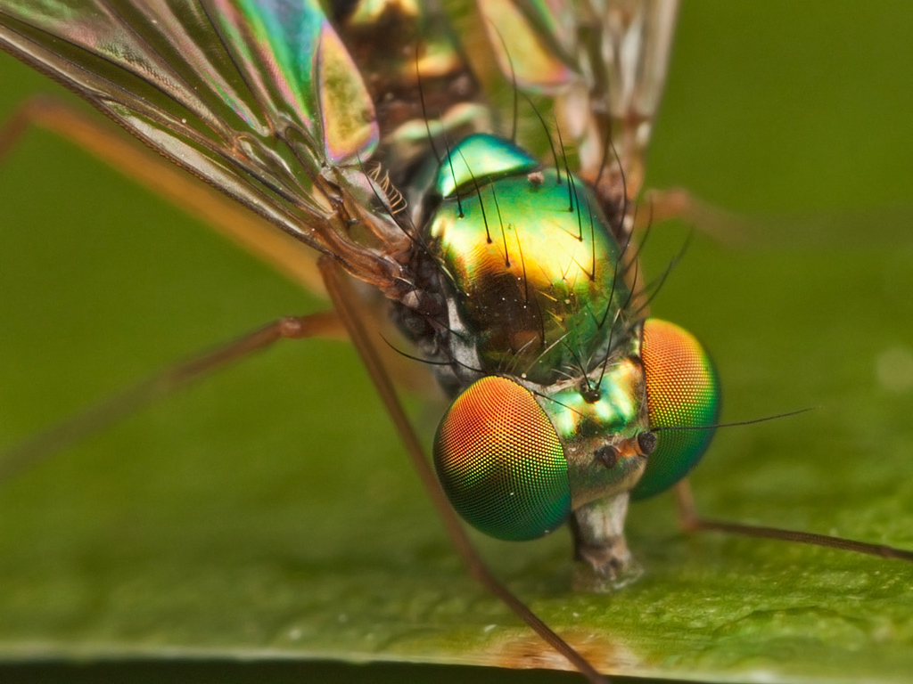 macro photography insect by john cogan