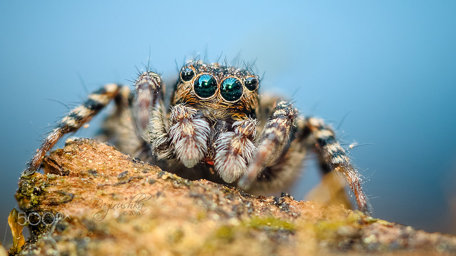 macro photography spider by john cogan