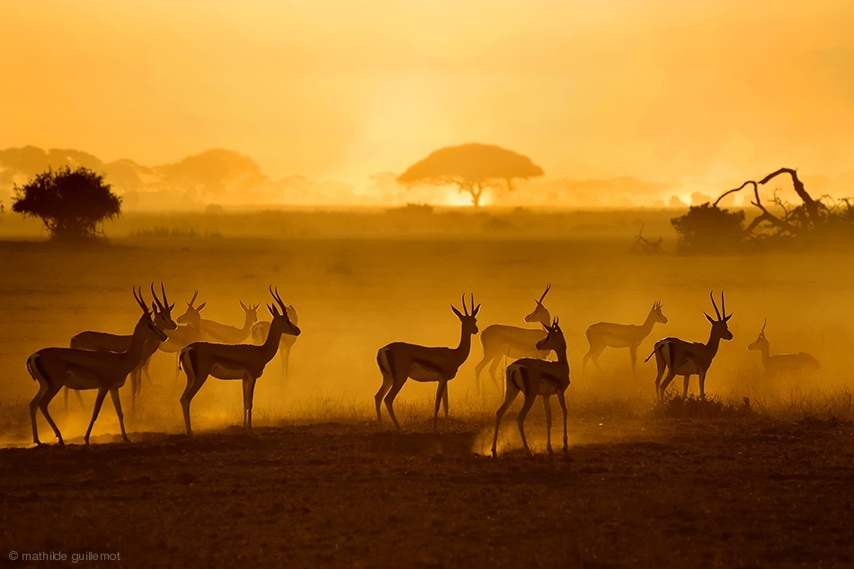 sunrise photography deer by mathilde guillemot